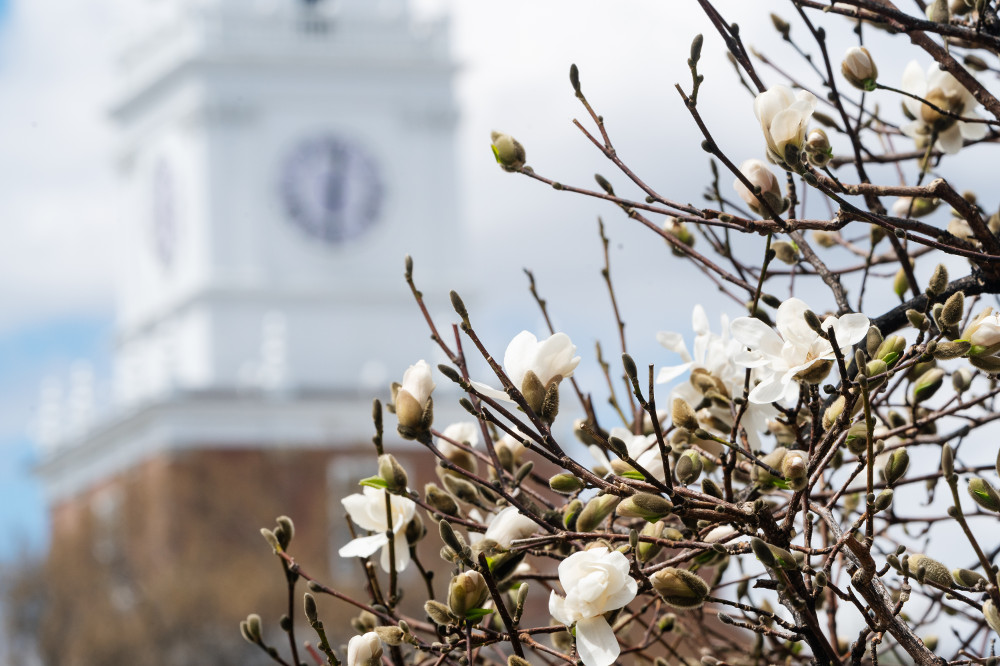 Trees bloom in spring in front of Baker Tower.